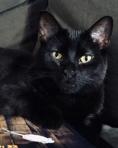 Kitty Bliss - Cat Sitting - Cat Care - Santa Monica Cat Care