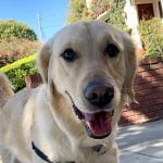 Dog Walking Service - Southern California Dog Walkers - Overnight Pet Sitting